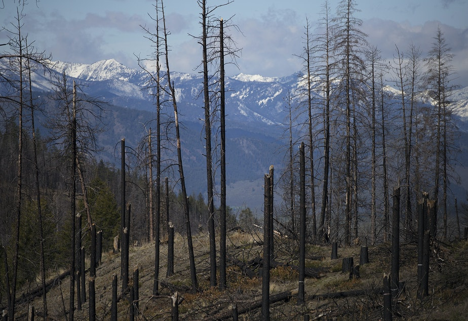 caption: An area burned in the Carlton Complex fire is visible on Tuesday, April 23, 2019, along Highway 20 near Loup Loup Ski Bowl, east of Twisp, Washington.