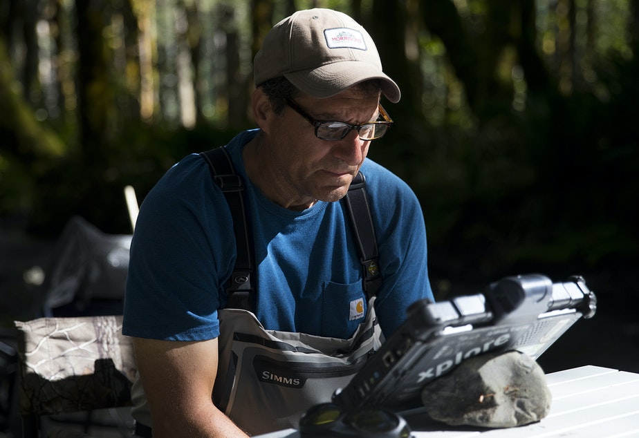 caption: George Pess, program manager of the Northwest Fisheries Science Center Watershed Program, records data tracking the length and weight of fish on Wednesday, September 4, 2019, along the Elwha River near Port Angeles.