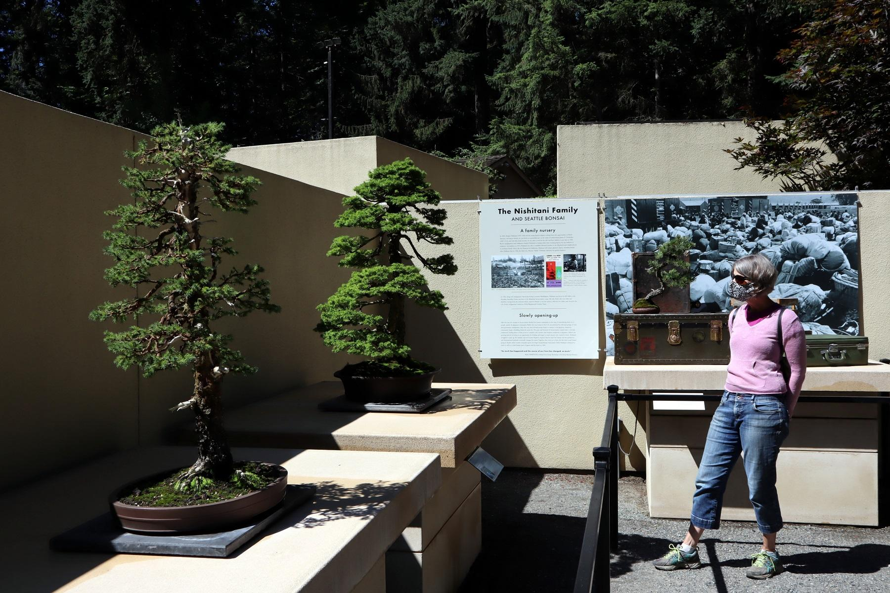 Kuow Bonsai Tree Exhibit Offers Novel Take On 75th Anniversary Of End Of World War Ii