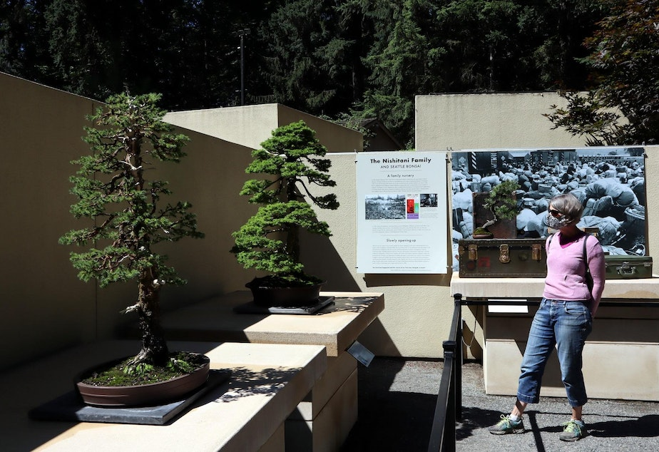 caption: Visitors are asked to wear masks, socially distance and follow one-way signage while perusing the outdoor bonsai displays.