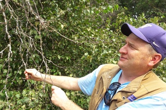 Ray Larson, Curator of Living Collections for the UW Botanic Gardens, which helps run arboretum, displays the leafless branch of a birch tree - one of several species stressed by recent warm, dry, summers, and the pests that prey on stressed trees.
