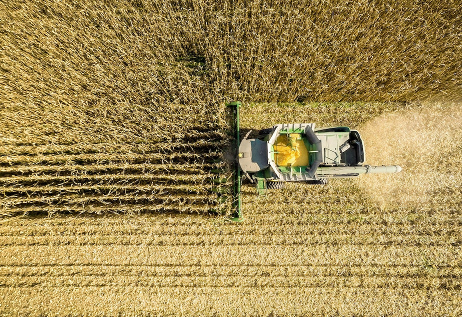 caption: An aerial view of a combine harvesting corn in a field near Jarrettsville, Md. A new study ties an estimated 4,300 premature deaths a year to the air pollution caused by corn production in the U.S.