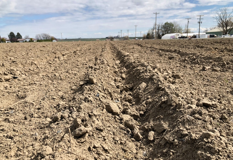 caption: Freshly planted furrows span out across the Columbia Basin as farmers get ready for the coming season as worries of COVID-19 spread in central and eastern Washington.