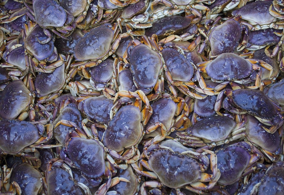 Dungeness crab like these, caught off the coast of Alaska, have been affected by the neurotoxin domoic acid because of algae blooms in recent years, which makes them unsafe to eat.