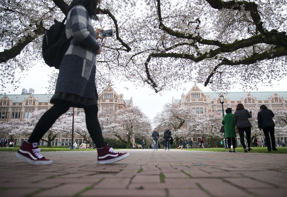 People walk amongst the cherry trees on Wednesday, March 27, 2019, on the University of Washington campus in Seattle.