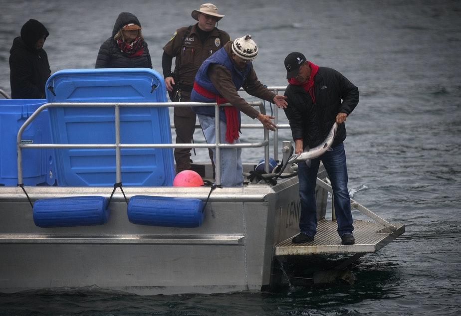 Lummi Tribal Chairman Jay Julius, right, releases a live chinook salmon into the water during a ceremonial feeding for qwe 'lhol mechen, the Lummi phrase translates roughly to 'our relatives under the sea', on Wednesday, April 10, 2019, near Henry Island.