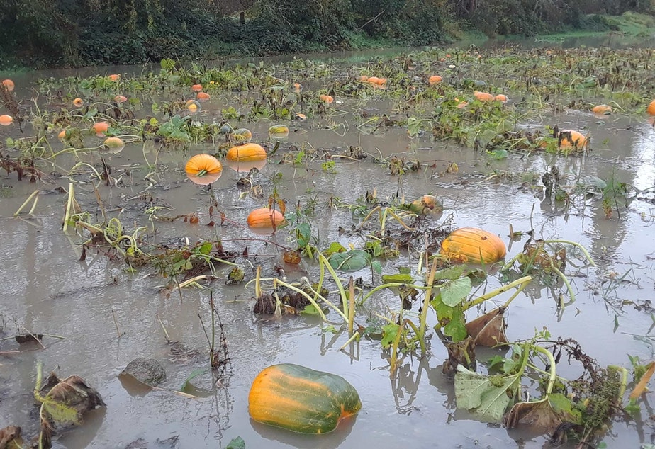 caption: Heavy rains left many farms under water, including First Light Farm in Carnation.