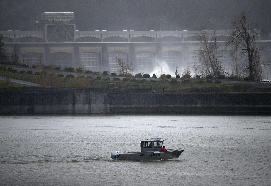 caption: Fishery technicians with the Columbia River Inter-Tribal Fish Commission conduct a non-lethal hazing mission, using shell crackers and sticks of dynamite to scare sea lions away from the area in an effort to protect salmon, on Friday, April 12, 2019, at the Bonneville Dam.
