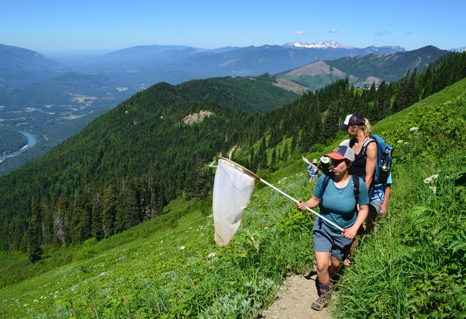 caption: Citizen scientists count butterflies on Sauk Mountain, in the North Cascades.