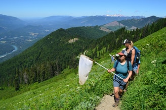 Citizen scientists count butterflies on Sauk Mountain, in the North Cascades.