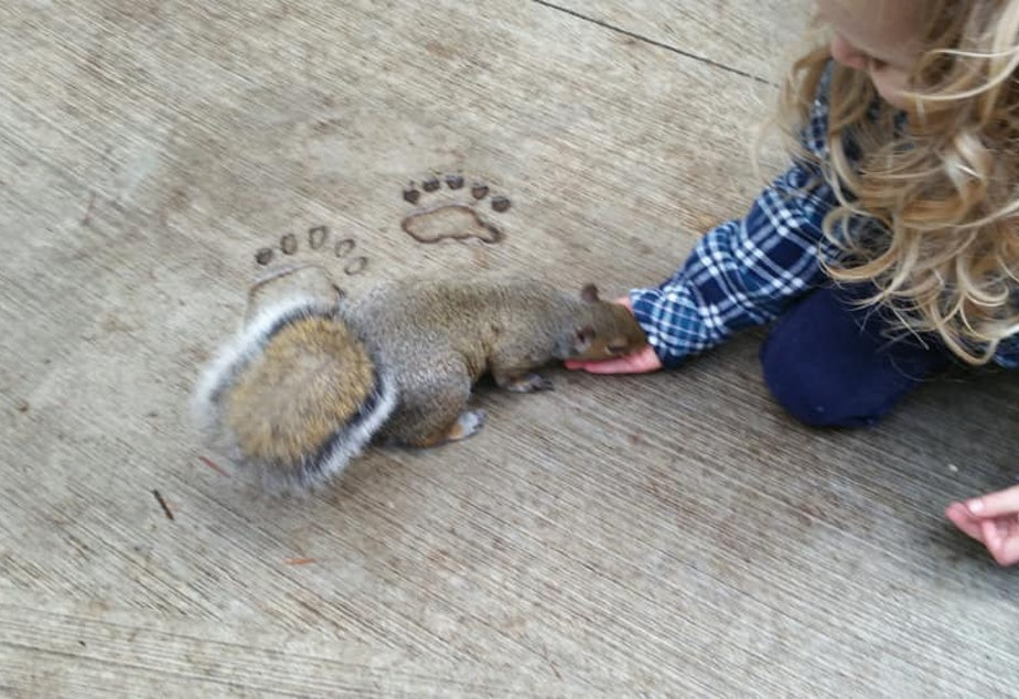 Harper was 3 when she picked up Kevin the squirrel at the Discovery Park play area in Seattle. Her mom Lauren Simpson said that Kevin appeared to be a nursing mom ... and was totally unfazed.