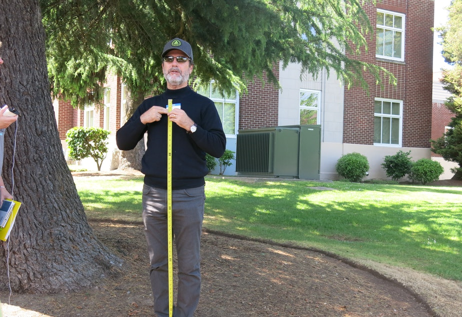 """caption: Volunteer Jim Davis demonstrates how to find """"majestic trees"""" for Plant Amnesty: they are 30 in. diamater """"at breast height."""""""