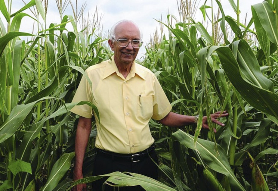 caption: Rattan Lal in an Ohio cornfield. The soil scientist is this year's World Food Laureate, earning a quarter of a million dollar prize for his pioneering work in soil improvement.