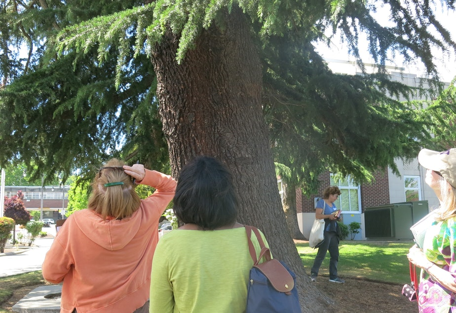 """caption: Plant Amnesty is training """"tree librarians"""" to help catalogue the city's trees."""