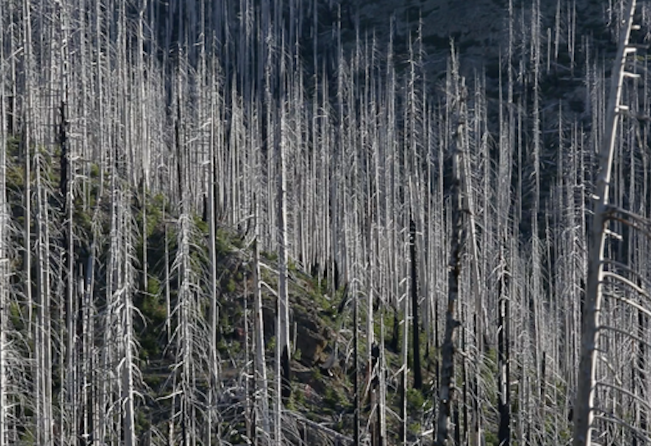 caption: <p>Dead trees fall every year in this part of the forest, blocking the trails.</p>