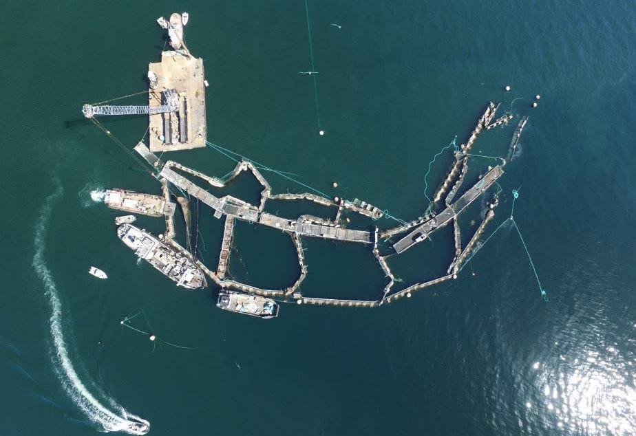 Cooke Aquaculture's ruined Atlantic salmon farm off Cypress Island on Aug. 28.