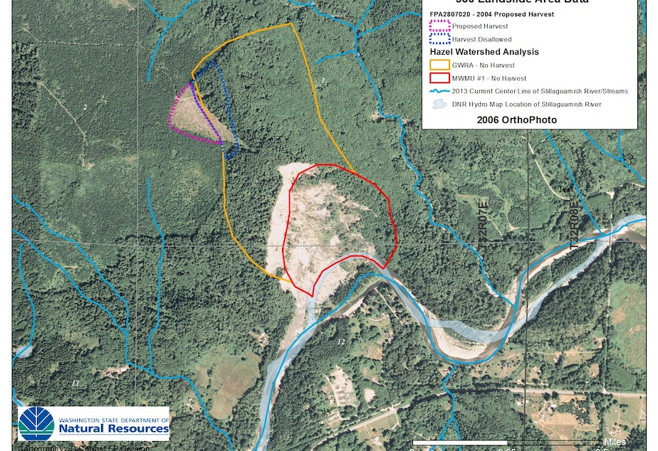 Washington Department of Natural Resources image shows 2004 clear-cut (near dotted purple line) extending into no-logging zone (marked with yellow line) at site of Oso landslide.