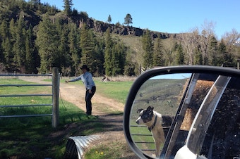 Liza Jane McAlister of Oregon opens a gate for the hay truck on 6 Ranch as her herding dog looks on from the back.