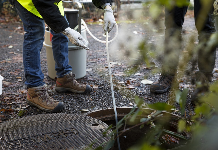 caption: UW researchers take wastewater samples to track Covid-19.