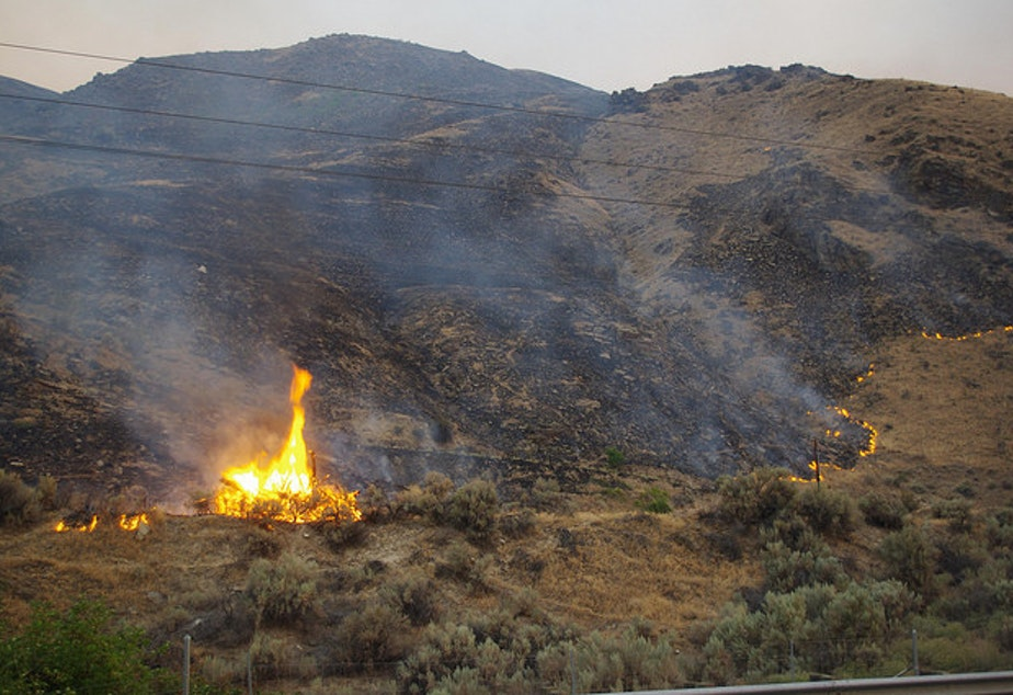 The Washington wildland fires in eastern Washington have so far cost the state more than $50 million.