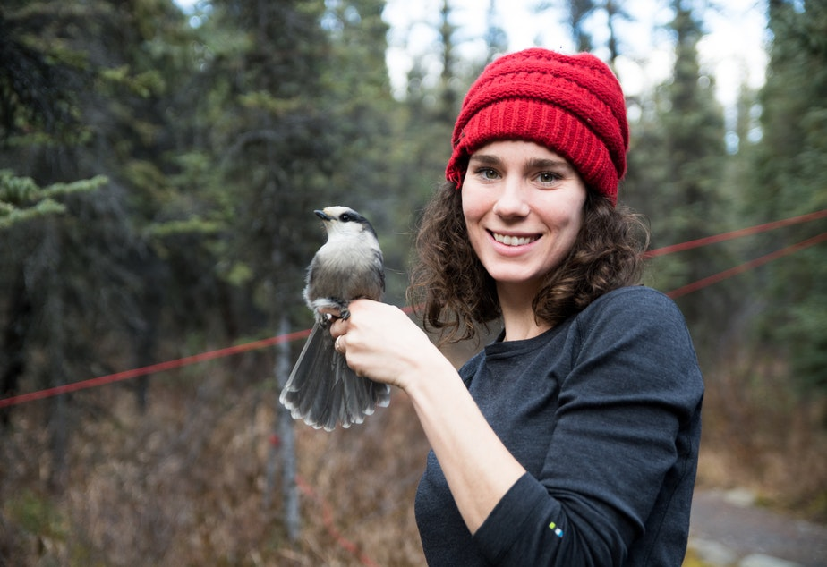 """caption: Kaeli Swift, a lecturer at the University of Washington, holding a Canada Jay in Denali National Park in Alaska.  Swift started the Facebook group """"West Coast Birders"""" in an effort to build a """"more inclusive birding community."""""""