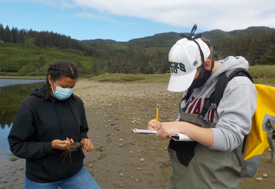caption: Makah fisheries technicians Charlotte Shaw (left) and Angelina Woods record data on a European green crab along the Tsoo-Yess River on the Makah reservation in May 2020.
