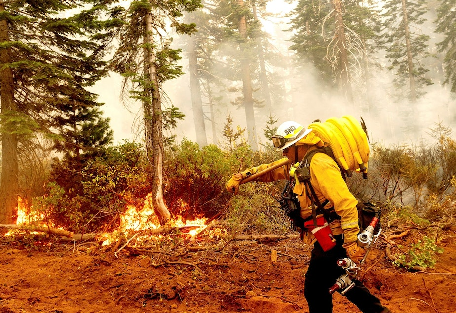 caption: Cal Fire Battalion Chief Craig Newell carries hose while battling the North Complex Fire in Plumas National Forest, Calif., on Monday.
