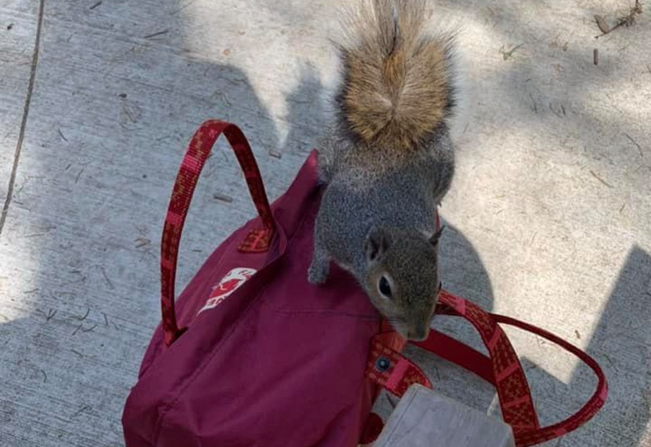 caption: Kevin the squirrel at the Discovery Park play area in Seattle's Magnolia neighborhood.