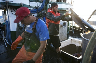 Nathan Cultee, right, and Nicholas Cooke, left, unload Atlantic salmon aboard the fishing vessel Marathon outside Home Port Seafoods on Tuesday in Bellingham.