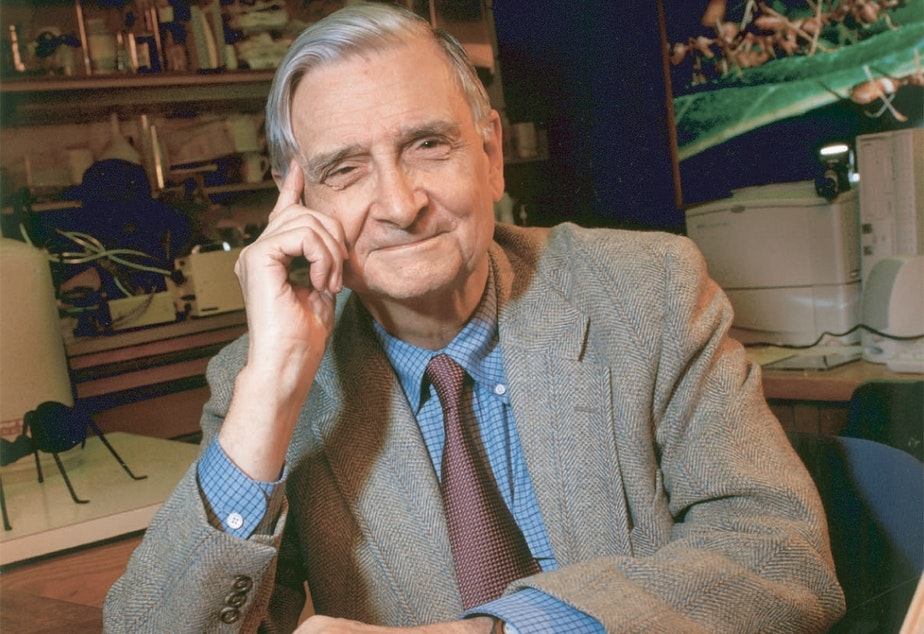 caption: E.O. Wilson says that if there is extraterrestrial life, they've probably already achieved the scientific knowledge we have on Earth.