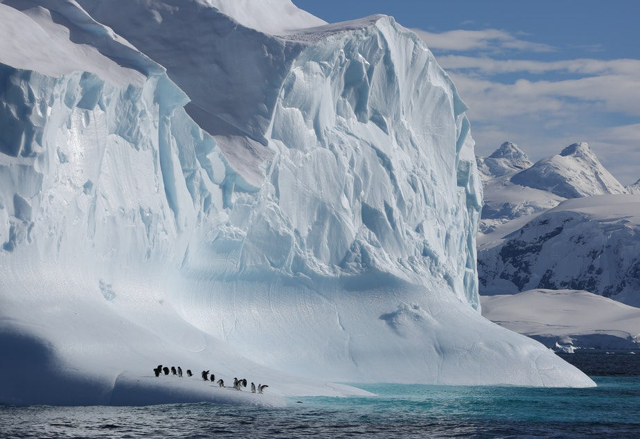 Gentoo penguins sit on an Antarctic iceberg in a scene from the new Netflix nature documentary series <em>Our Planet.</em>