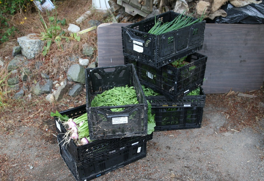 caption: Food grown and harvested for the Ballard Food Bank