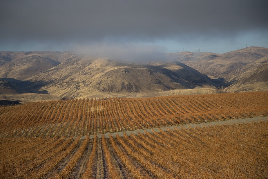 Orchards and vineyards are shown along the Columbia River on Tuesday November, 20, 2018, near Rock Island.