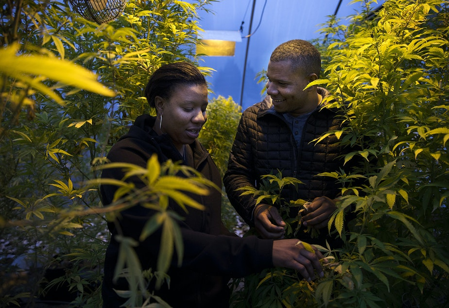 Joy Hollingsworth, left, and Raft Hollingsworth III stand in their cloning greenhouse on Thursday, January 18, 2018, at The Hollingsworth Cannabis Company in Mason County.  Tap or click on the first image to see more.