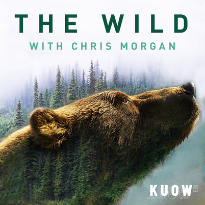 caption: The Wild with Chris Morgan