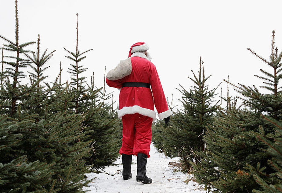 caption: Christmas tree growers are reporting that 2019 has been the best year they've had in decades. (Andreas Rentz/Getty Images)