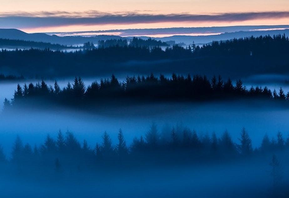 fog drenched Oregon coast