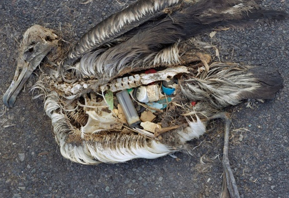 The unaltered stomach contents of a dead albatross chick photographed in September 2009 include plastic marine debris fed to the chick by its parents.