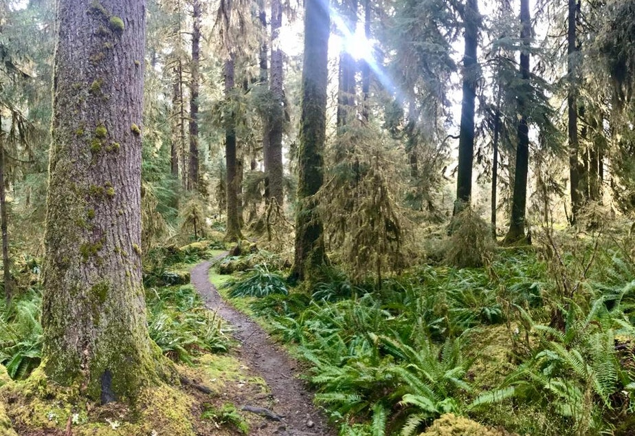 The Olympic Peninsula in Washington state his home to the Pacific chorus frog, elk and a variety of other species.