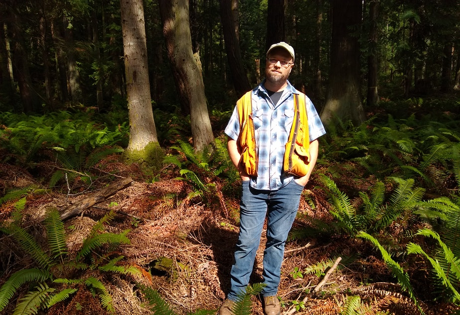 Glenn Kohler, a forest entomologist for the Washington Department of Natural Resources, visits a forest near Bellingham where he spotted dead trees during an annual forest health survey.