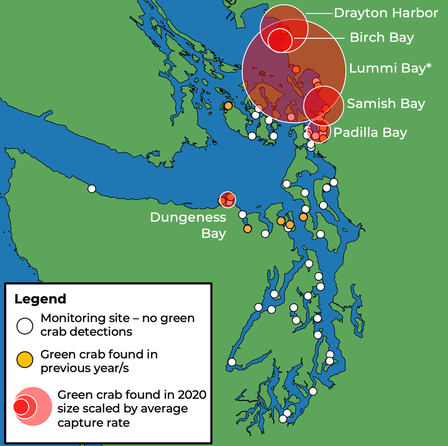 caption: Thousands of European green crabs have been found in northern Puget Sound in 2020. Map does not include sightings in British Columbia or the outer Washington coast.