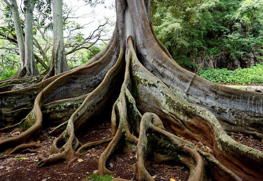 caption: Tree with deep roots