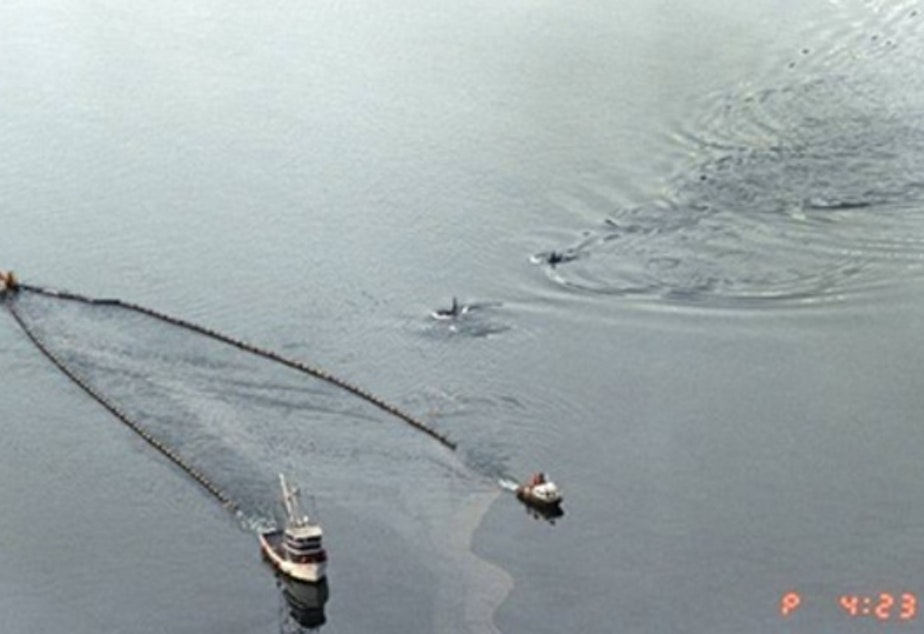 Killer whales swimming in Prince William Sound alongside boats skimming oil from the Exxon Valdez oil spill. Scientists report that orca populations there have not recovered and oil is still being found.