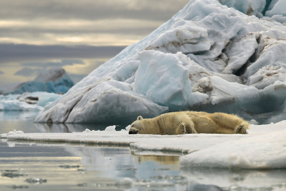 Return to Svalbard: Earth's icy food chain is about more than polar bears