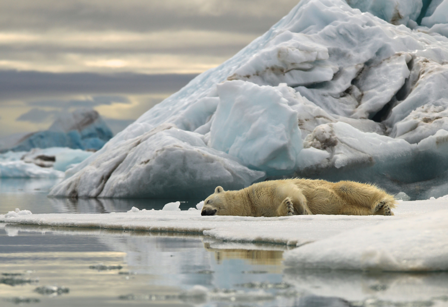 caption: A polar bear takes a nap as a boat passes by the ice on Svalbard.