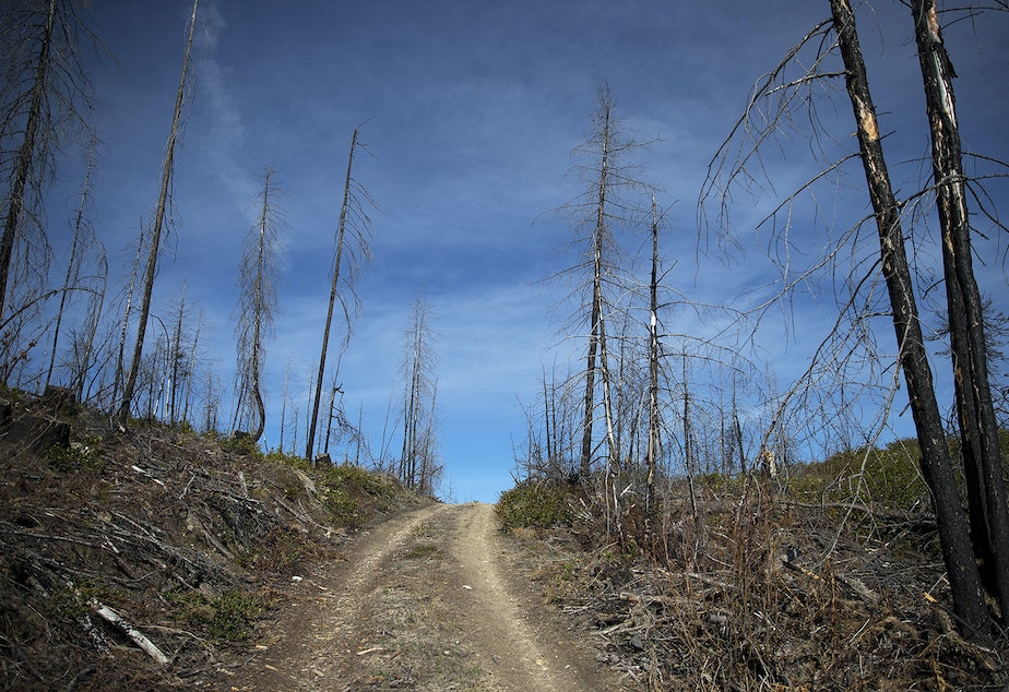 caption: An area that was burned in the Carlton Complex fire is shown on Tuesday, April 23, 2019, along Highway 20 near Loup Loup Pass Ski Bowl, east of Twisp, Washington.