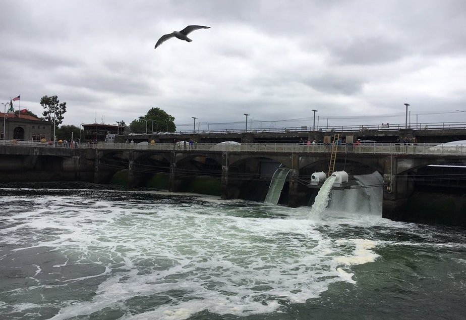caption: The Ballard Locks, at the west end of the Lake Washington Ship Canal in Seattle.