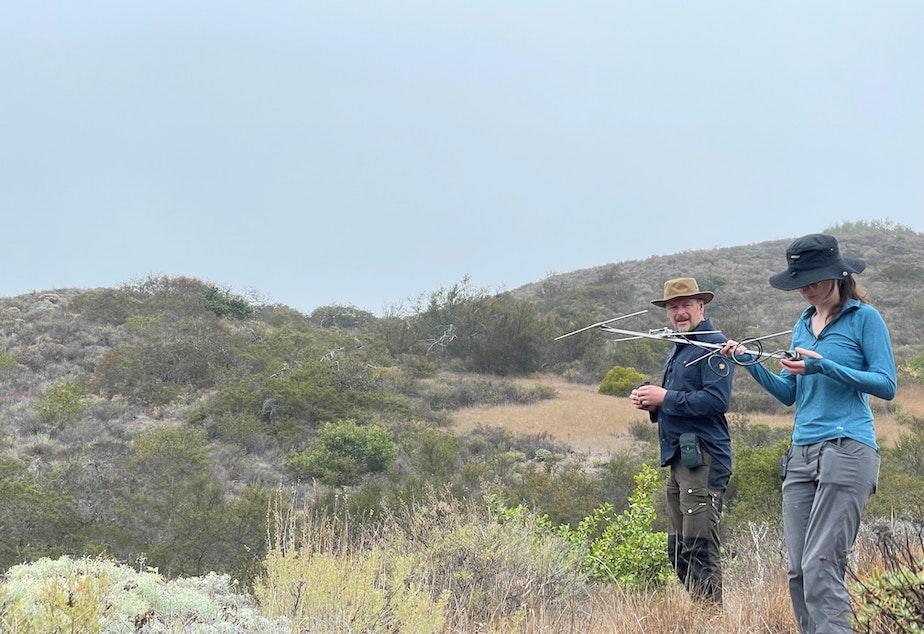 caption: Host Chris Morgan and biologist Lara Brenner track a fox with a radio collar on Santa Cruz island.