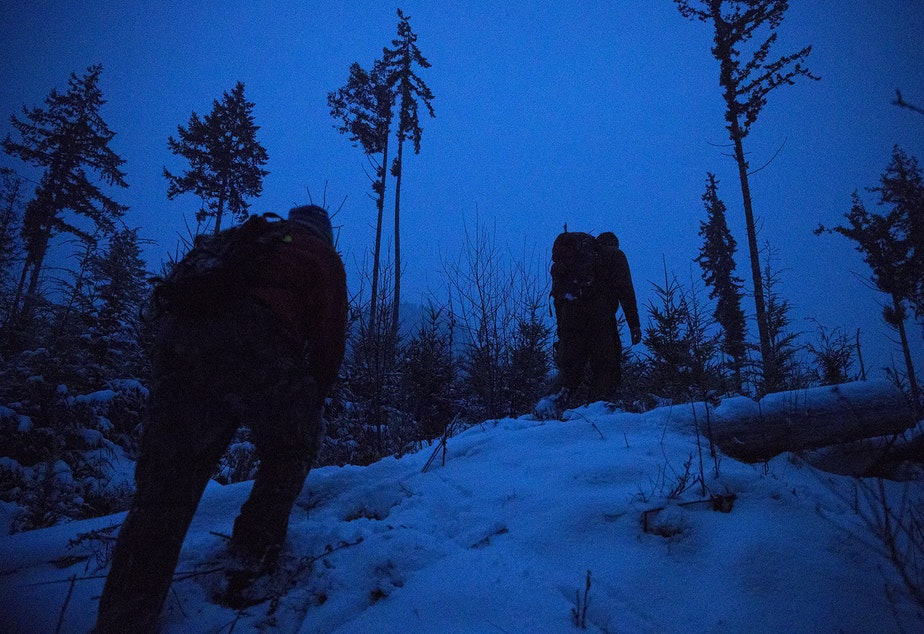 caption: Houndsman Greg Jones, left, and Chris Morgan, right, hike through the snow at dusk after an attempted cougar capture mission conducted by researchers of Bramble, a roughly 3-year-old female cougar, on Tuesday, January 14, 2020, on the Olympic Peninsula.