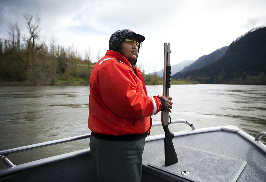 Teddy Walsey, a fishery technician with the Columbia River Inter-Tribal Fish Commission holds a shotgun while looking for sea lions during a non-lethal hazing mission on Friday, April 12, 2019, on the Columbia River near the Bonneville Dam. Shell crackers are shot at the sea lions to scare and drive them away from the area in an effort to protect salmon.